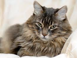 Cat3_medium