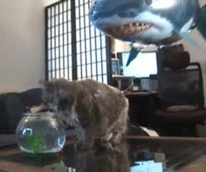 cat shark