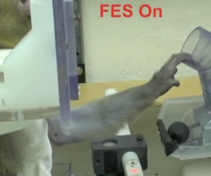 Monkey Neuroprosthesis