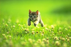 Field kitten