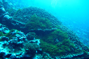 Coral Reef - Attribute NOAA / Flickr