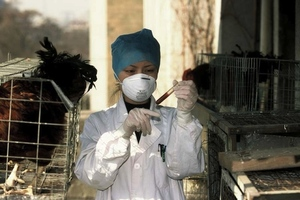 Bird flu research in China (Credit: WHO / P. Virot)