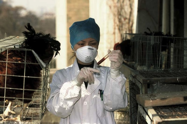 birds flu term paper Bird flu (avian influenza such as when people who have extensive contact with sick birds get the bird flu individuals who survive may have long-term.