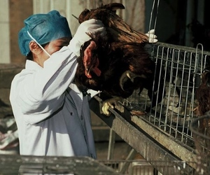 Bird flu research in China 2 (Credit: WHO / P. Virot)