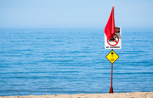 Jellyfish warning (Shutterstock)