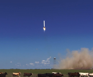 SpaceX Grasshoppper launch cows