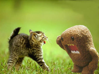 Cat-vs-domokun