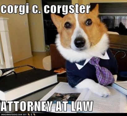 Funny-dog-pictures-corgi-c-corgster-attorney-at-law