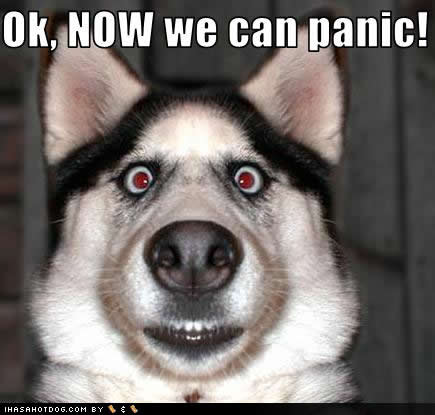Funny_dog_pictures_now_panic_the_world_is_going_to_end-s435x415-180592_medium