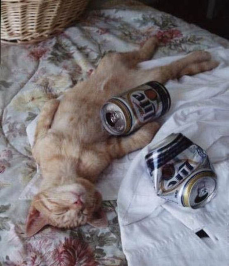 Drunk_cat_passed_out