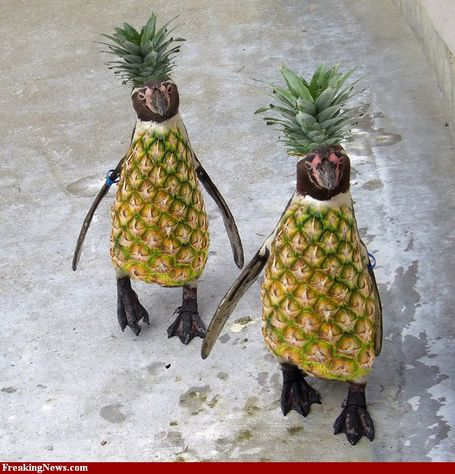 Pineapple-penguins-55933_medium
