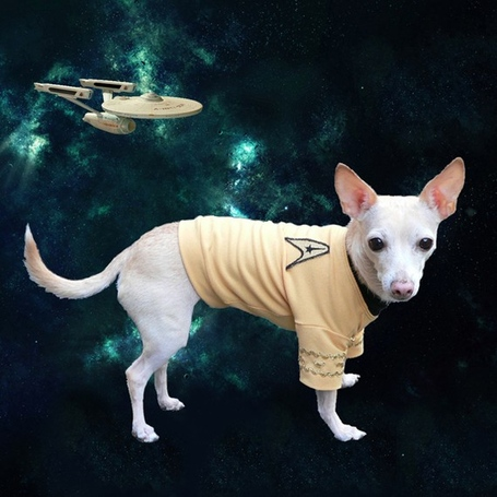 Star-trek-captain-kirk-dog-uniform_medium