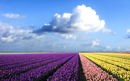 Flower-field_medium