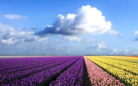 Flower-field_medium