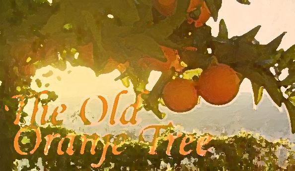 oranje tree