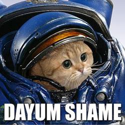 dayum shame spacesuit cat