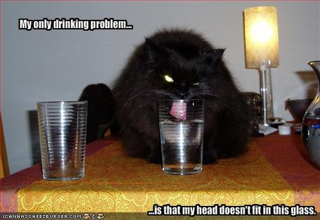 Funny-pictures-your-cat-has-a-drinking-problem_medium