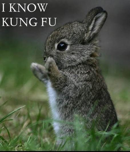 Kungfubunny_medium