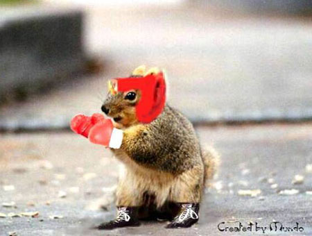 Boxing-squirrel-copy_medium