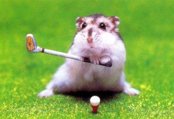 Golf_rat_medium