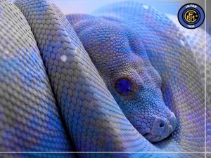5-serpente