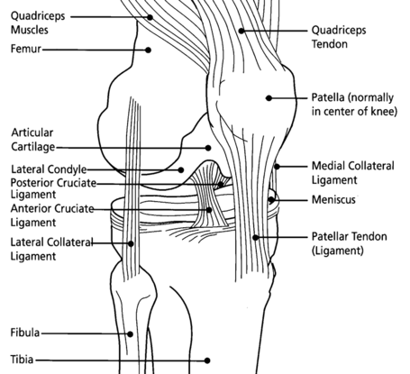 Knee_diagram_medium