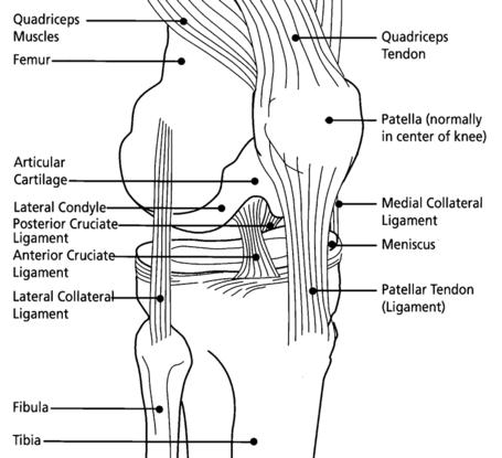 Knee_diagram_medium