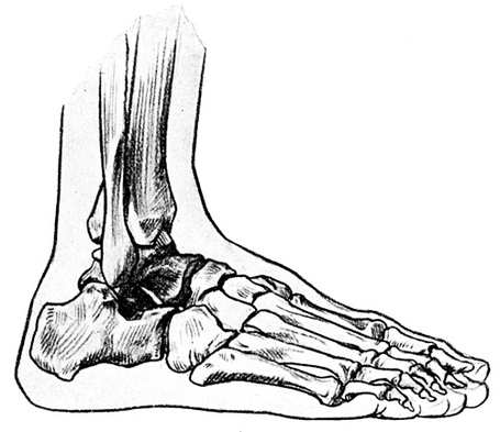 Foot-anatomy-2_medium