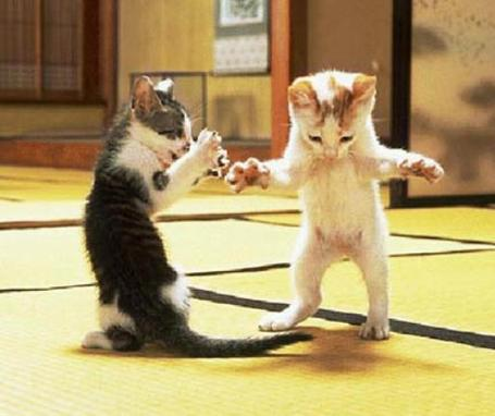 Dancing-kittens-807_medium