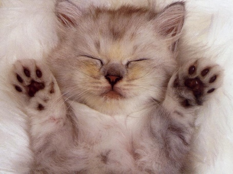 Cute-kittens-20-great-pictures-1_medium