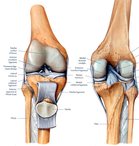 Knee-patella_medium