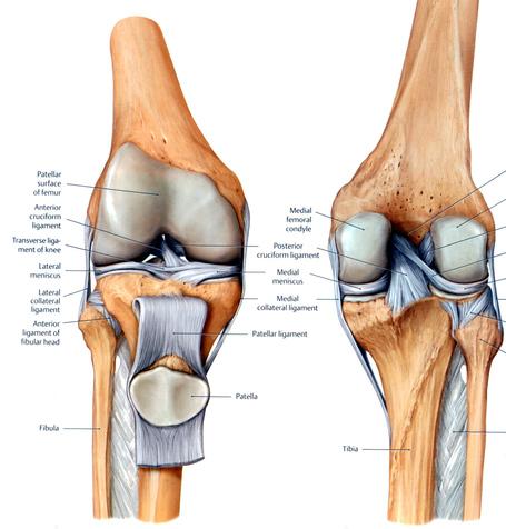 Knee-patella_medium