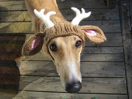 Dog-with-reindeer-antlers-funny-dogs_medium