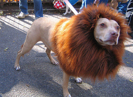 Dog-lion-costume_medium