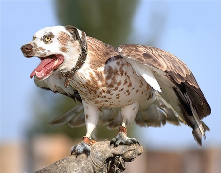 Hawk-dog_medium