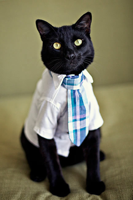 Serious-business-cat-kitten-kitty-pic-picture-funny-lolcat-cute-fun-lovely-photo-images_medium