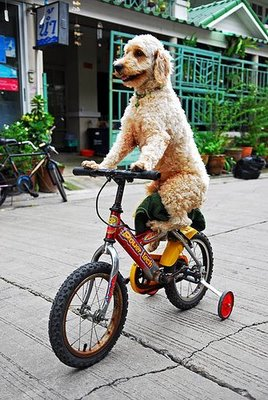 Dog_on_a_bike_medium