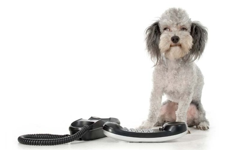 Dog_with_phone_medium