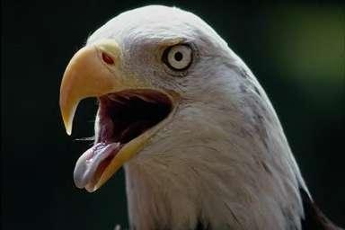 Eagle3_medium