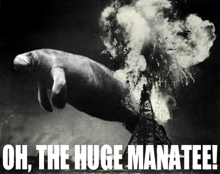 Oh-the-huge-manatee_medium