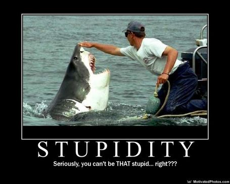 Stupidity_medium