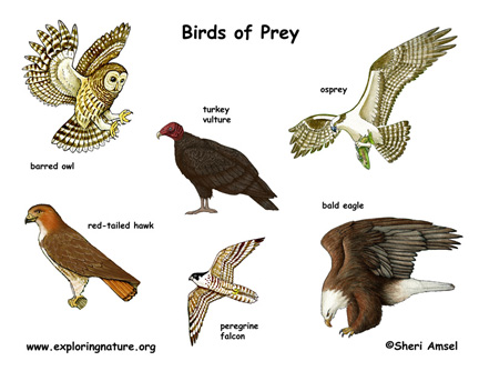 Birds_of_prey_poster72_medium