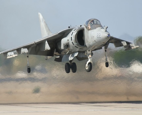 Harrier_medium