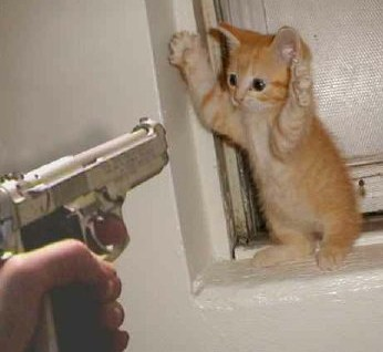 Kitten-and-gun_medium