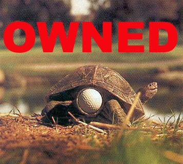 Turtle_golf_ball_medium