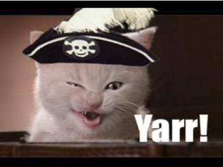 Pirate-cat_medium