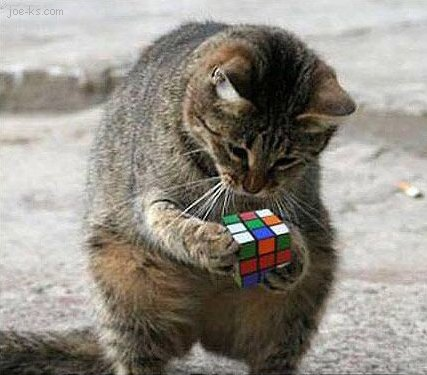Rubikscubecat_medium
