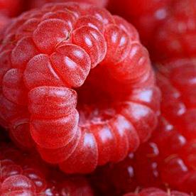 Raspberry_medium