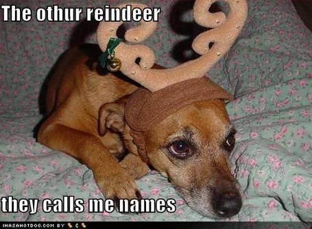 Funny-dog-pictures-the-other-reindeer_medium
