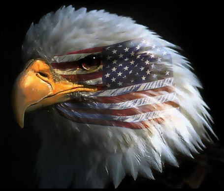 Eagle_american_flag_medium